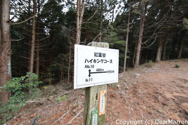 3H4A9859_R.jpg